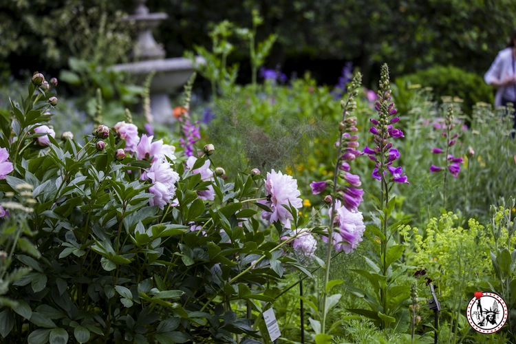 18 choses a faire gratuitement new york for Au jardin botanic gardens