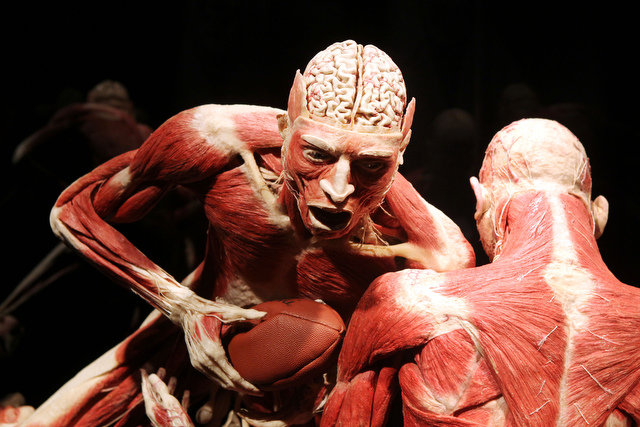 body world new york