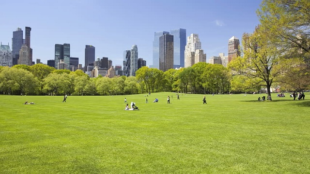 central park : sheep meadow